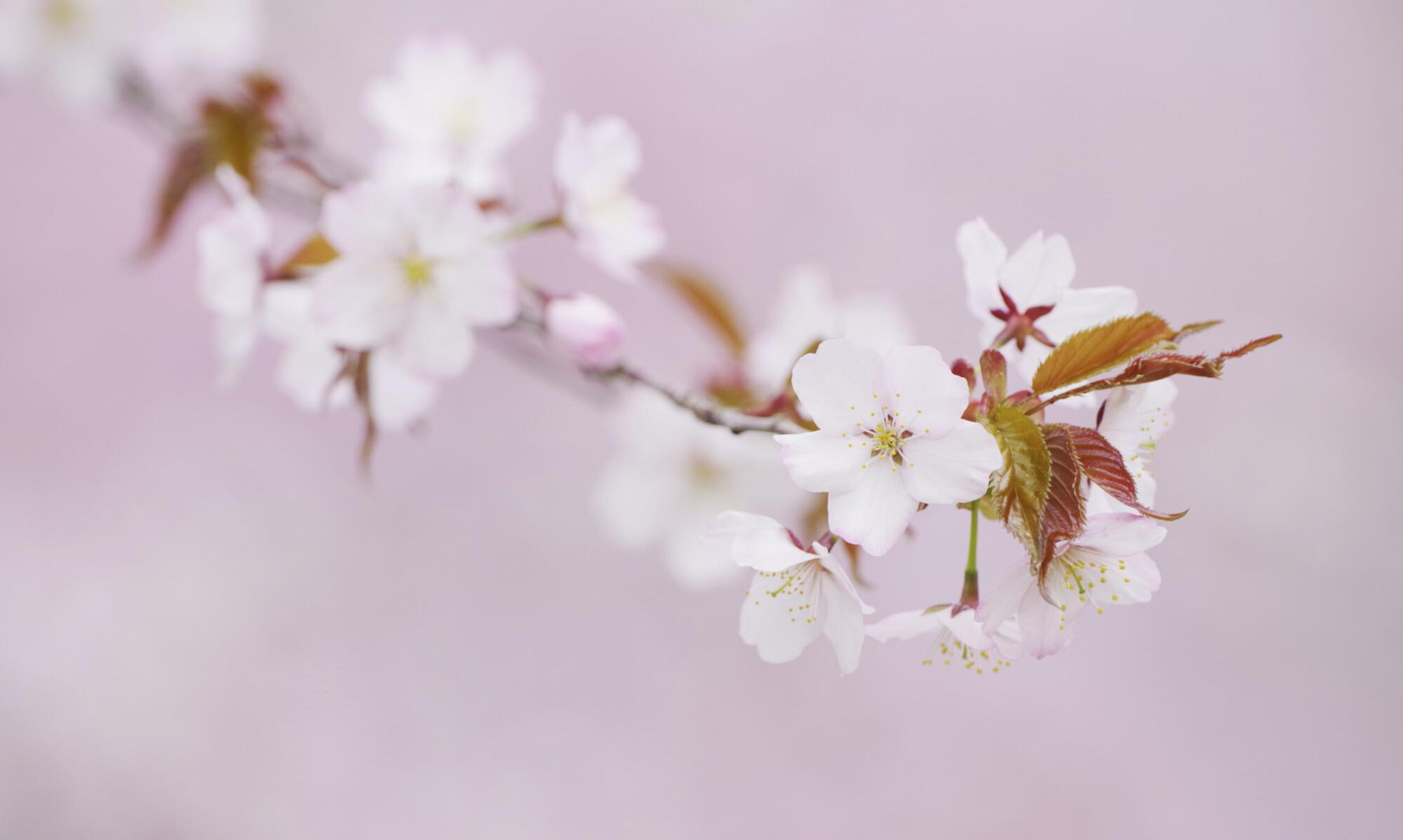 小林義明のLove-Nature.me